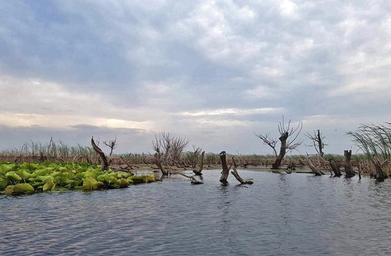 Excursie Delta Dunarii - Tulcea trunchiuri de copaci in Delta Superioara