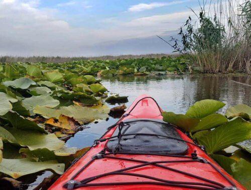 Caiac rosu - excursie delta dunarii