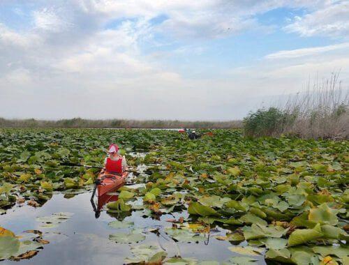 Excursie delta dunarii - printre nuferi