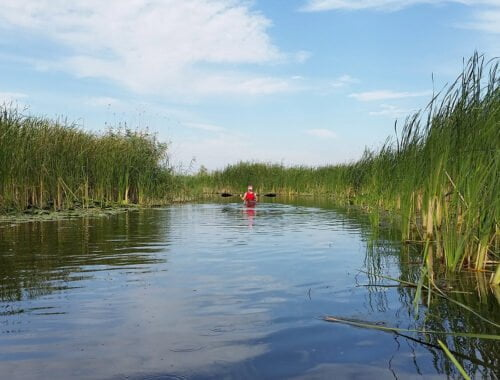 Excursie delta dunarii - caiac in departare