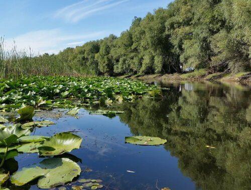 Delta Dunarii Tulcea- canal cu nuferi in Delta Superioara